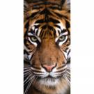 Dětská osuška Tygr